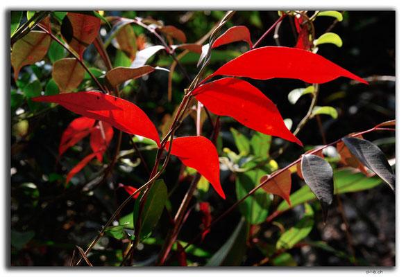 HK0031.Blätter