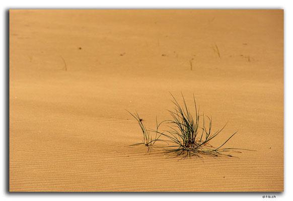 PL299.Leba.Wüste