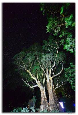 AU1068.Mt.Remarkable N.P.Sterne und Gumtree