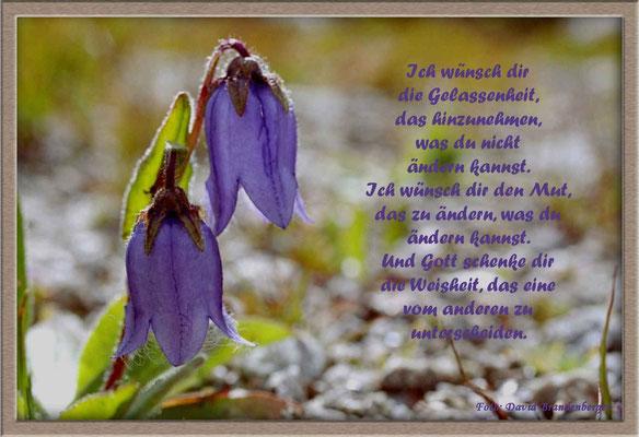 S0044 Bärtige Glockenblume.CH