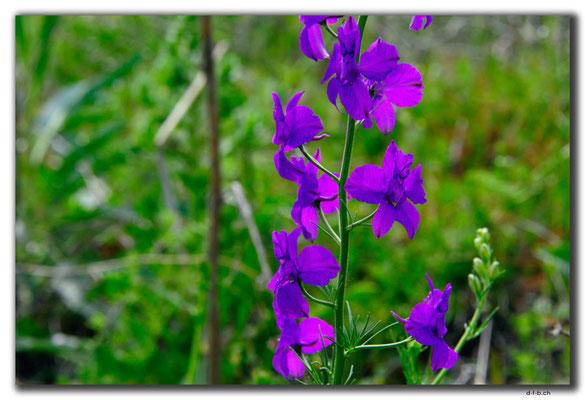 TR0927.Blume
