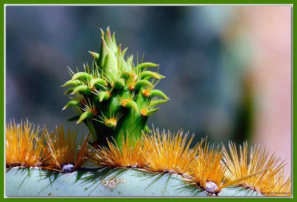 LAN026 Jardin de Cactus