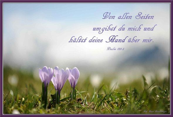 S0123.Krokus.Klosters.CH