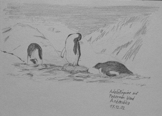 021.Skizze, Adeliepinguine auf Petermann Island /Antarctica