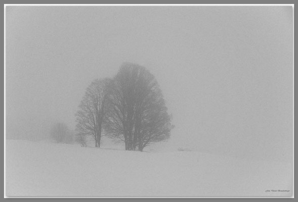 A0604.Bäume auf Bosca.Klosters