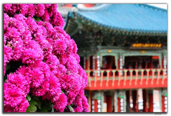 KR0349.Busan.Samgwangsa Temple