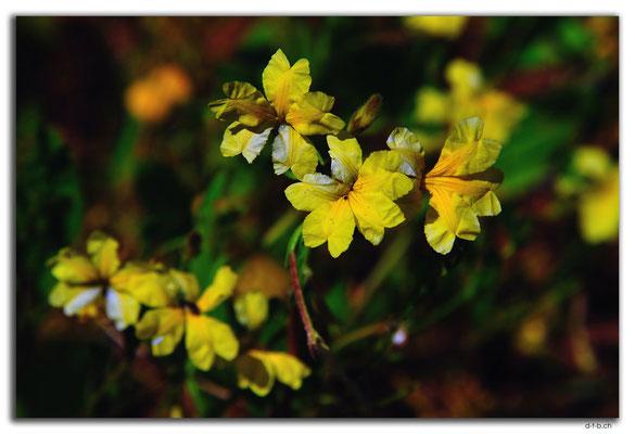 AU0386.Blumen