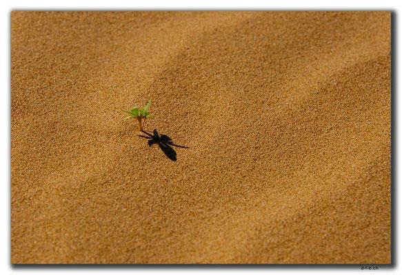 MN0044.Elsen Tasarkhai.Pflänzchen im Sand