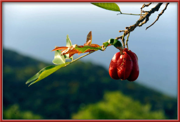 JM025 Frucht