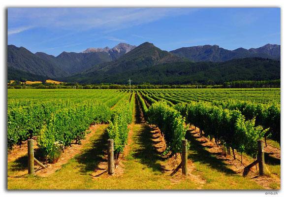 NZ0685.Wairau Valley.Vineyard