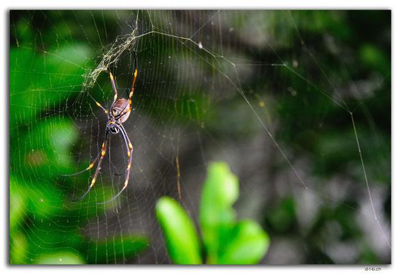 AU1615.Sydney.Spider