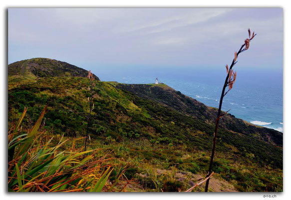NZ0108.Cape Reinga