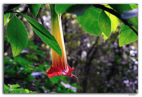 NZ0427.Mount Lees Reserve.Blume