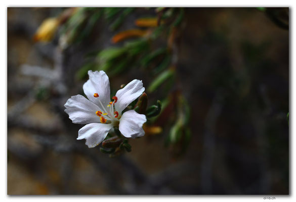 AU1018.Coffin Bay N.P. Golden Island Lookout.Blume