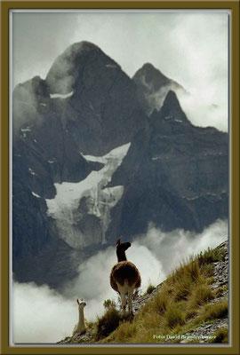59.Lamas,La Cumbre,Bolivien
