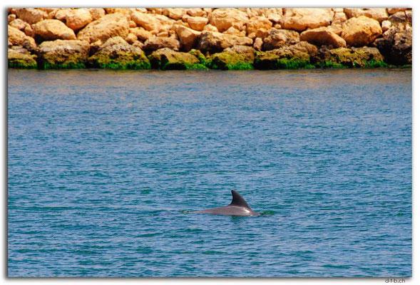 AU0717.Mandurah.Delfin