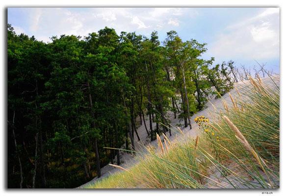 PL305.Leba.Wald