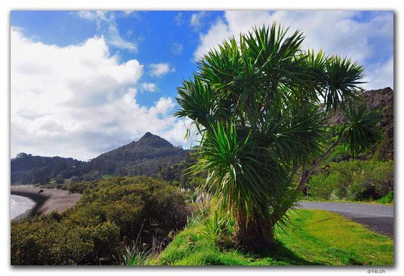 NZ0067.Tokatoka Peak
