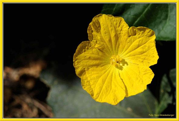 JO002.Blume.Aqaba