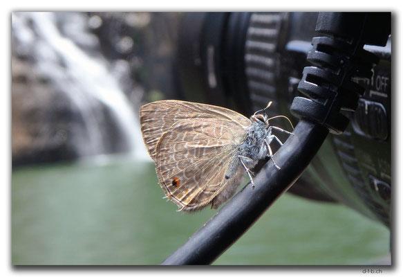 VN0318.Pongour Falls.Schmetterling