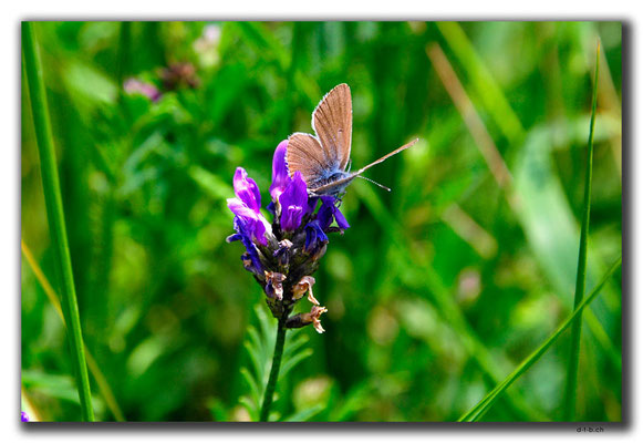 AM027.Sevanavank.Schmetterling & Blume