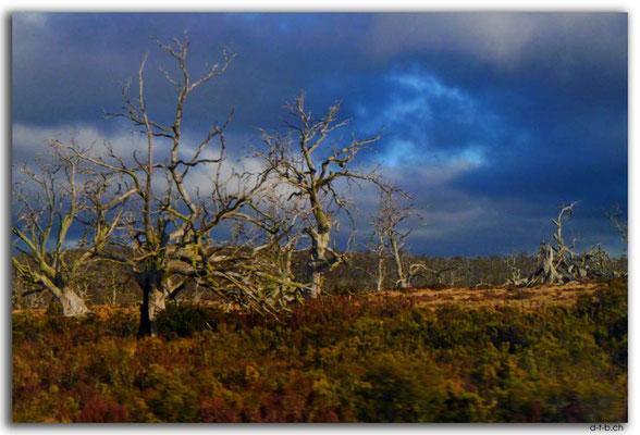 AU1404.Ghost Trees