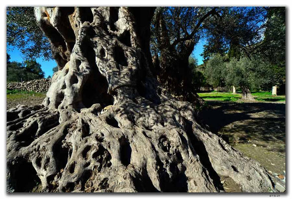 GR0515.Gortyn.Baum