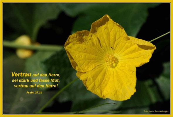 S0116.Blume in Aqaba.JO