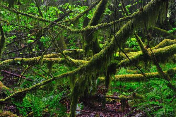 CA0139 Squamish Regenwald