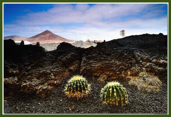 LAN014.Kakteen und Vulkan