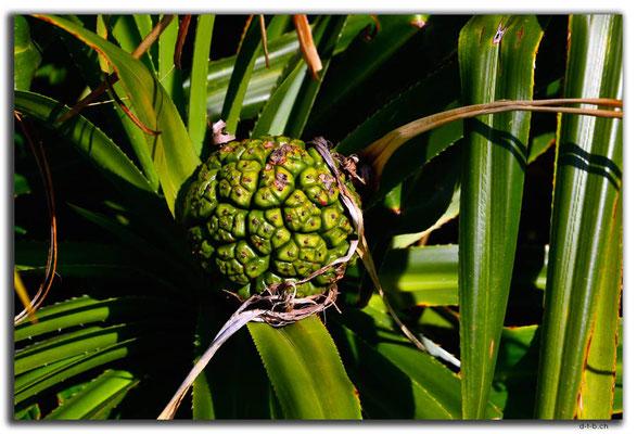 HK0095.Lamma Island.Frucht