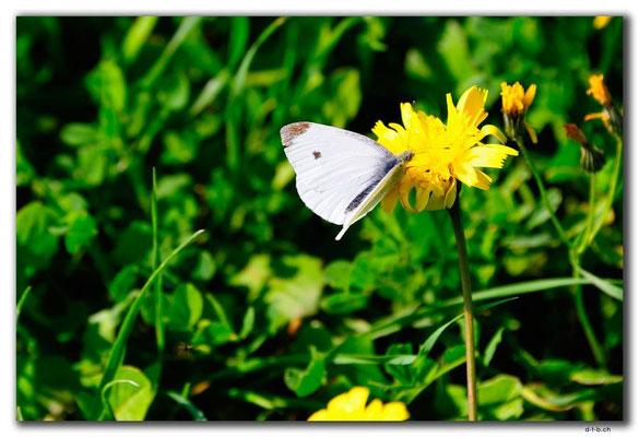 GR0542.Malia.Schmetterling an Blume