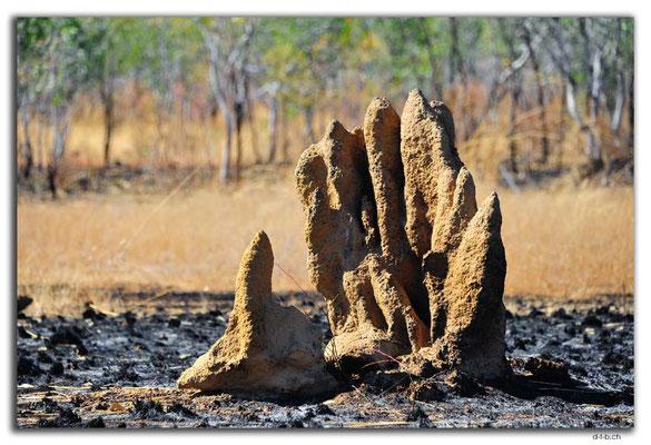 AU0187.Termitenbau-Hand