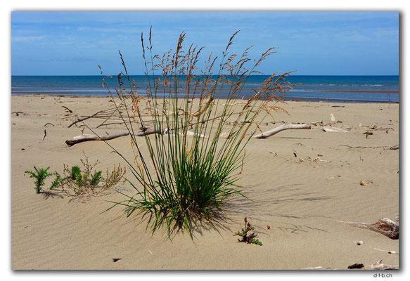NZ0598.Milnthorpe Beach