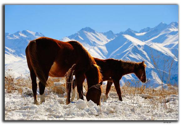 KG0038.Bishkek.Kyrgyz Ala Too und Pferde