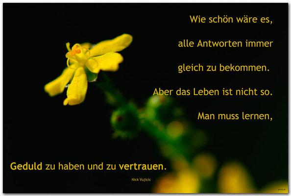 S0230.Jüchen.Blume. Text: Nick Vujicic