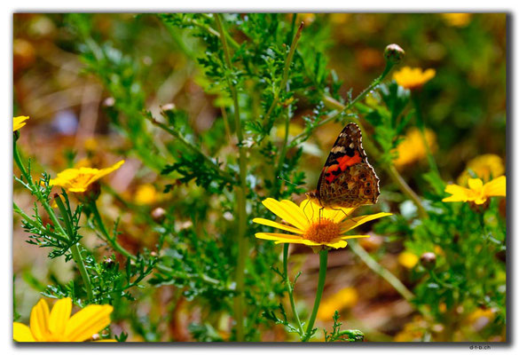 TR0498.Girne.Schmetterling