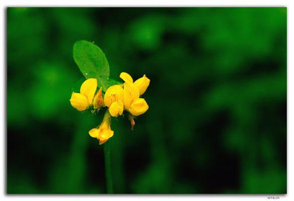 NZ0890.Bluff.Flower