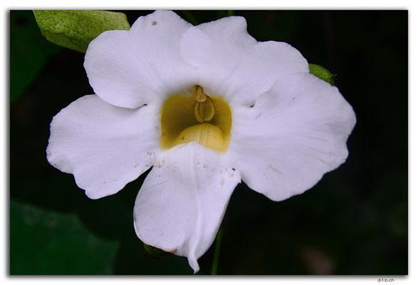 ID0070.Ubud.Blume