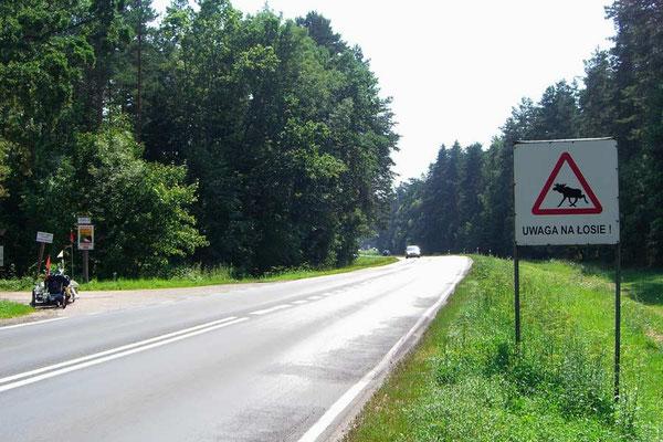 PL: Solatrike und Achtung Elche!
