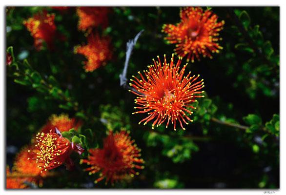 AU0614.Nilgen N.R.Blume