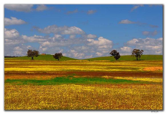 AU0630.Felder bei Mogumber