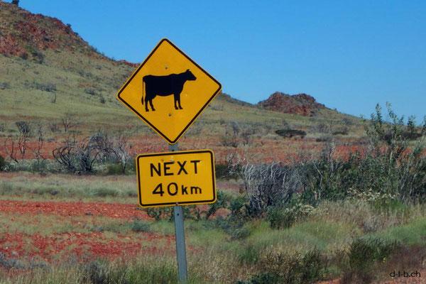Australien.Achtung-Kuh
