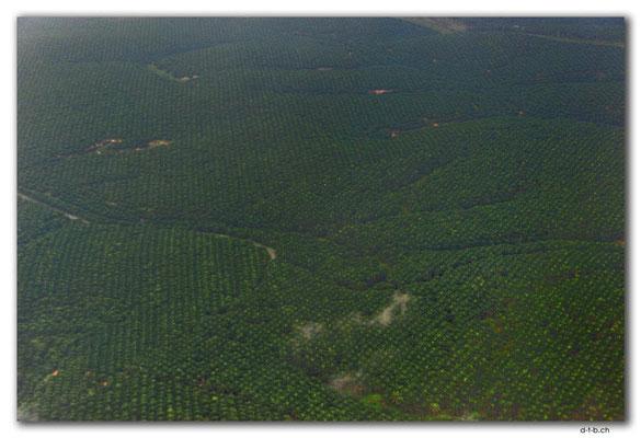 MY0001.Palmölplantage