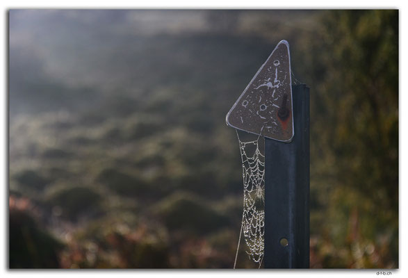 AU1362.Overland Track.Spiderweb at the sign