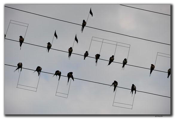 Iran, Vögelnoten