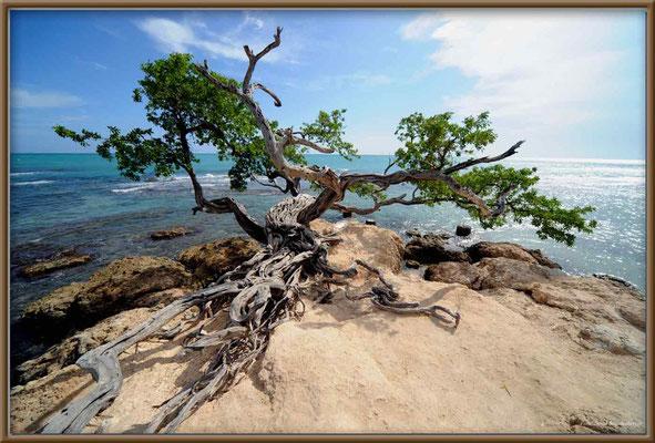 JM096.Baum.Treasure Beach