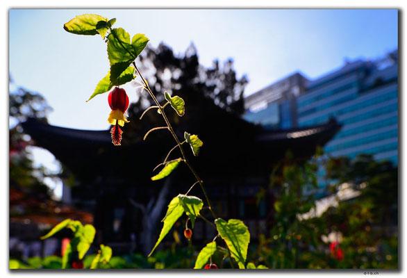 KR0061.Seoul.Jogyesa Temple