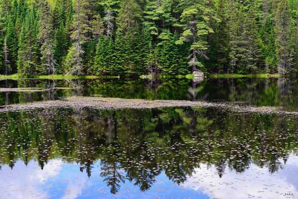 CA0480 Algonquin Park Amikeus Lake