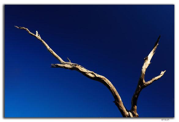 AU0902.90 Mile Road.Abgestorbener Baum